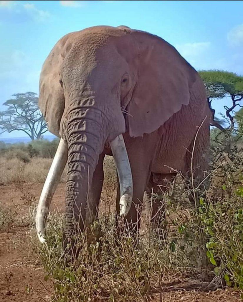 Craig the Elephant